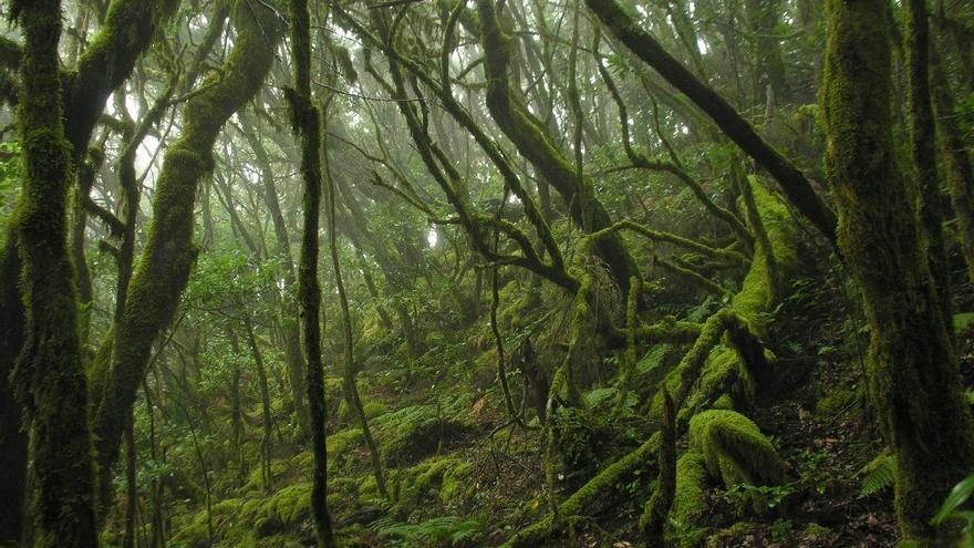 La Gomera refuerza la protección del Parque Nacional de Garajonay