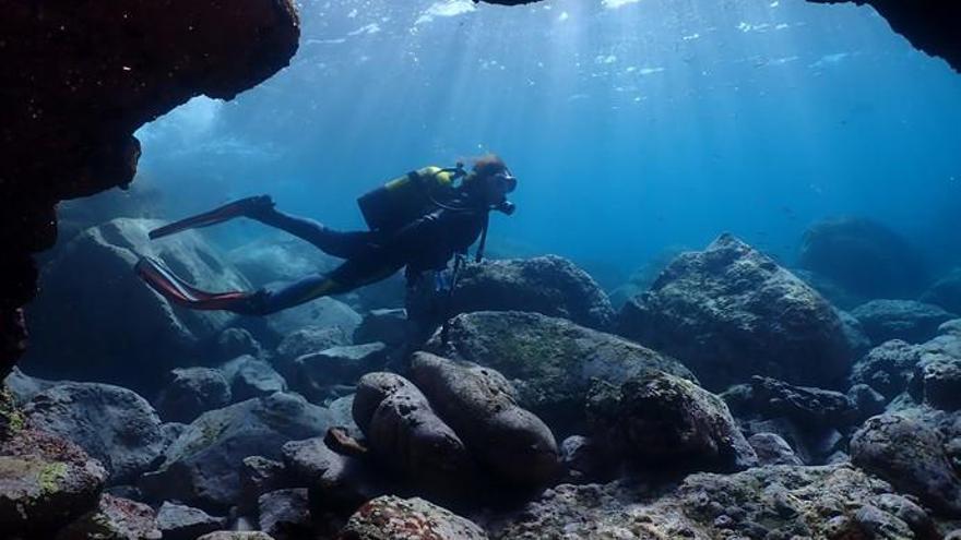 El VI Fotosub Sardina saca a superficie las maravillas de sus fondos marinos