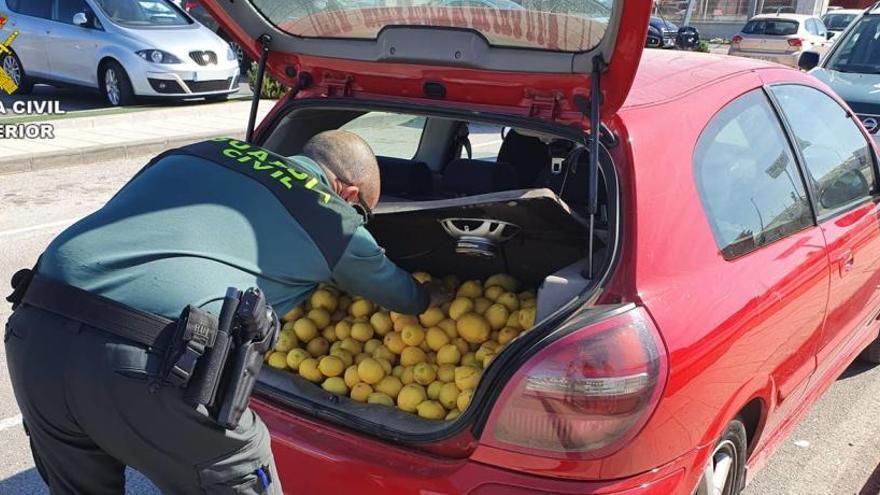 La Guardia Civil recupera 140 kilos de cítricos robados en Pego