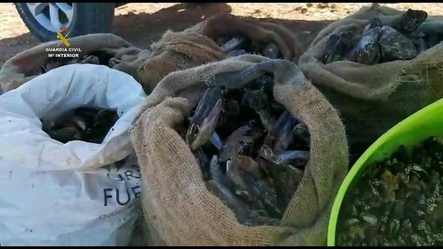 La Guardia Civil denuncia a tres personas por capturar 250 Kg de mejillones en época de veda en Fuerteventura