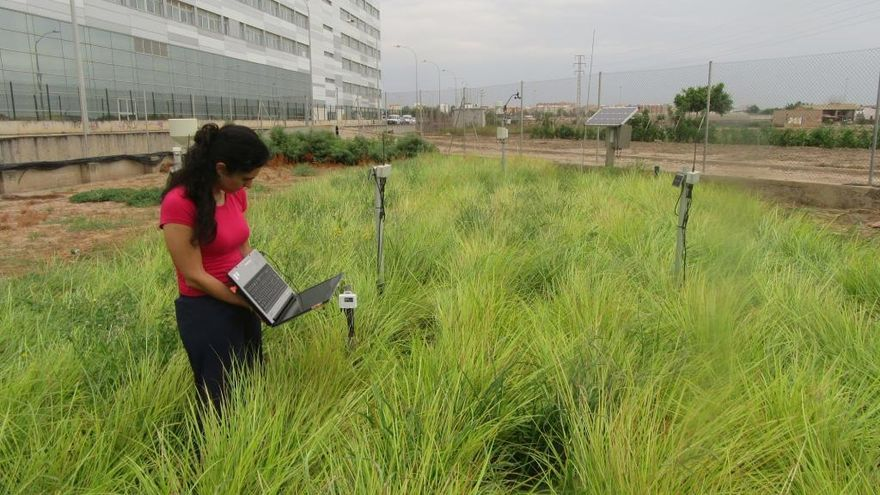 Una investigadora de la UPV, premio internacional por reducir el agua en cultivo de chufas