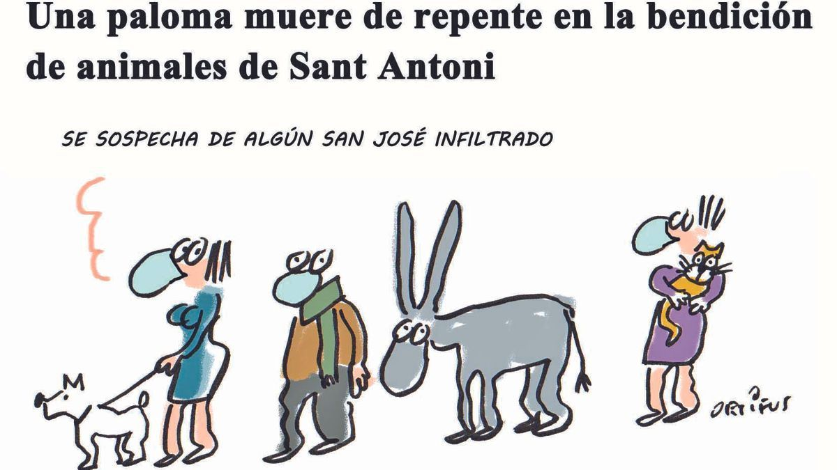 Una paloma muere de repente en la bendición de animales de Sant Antoni
