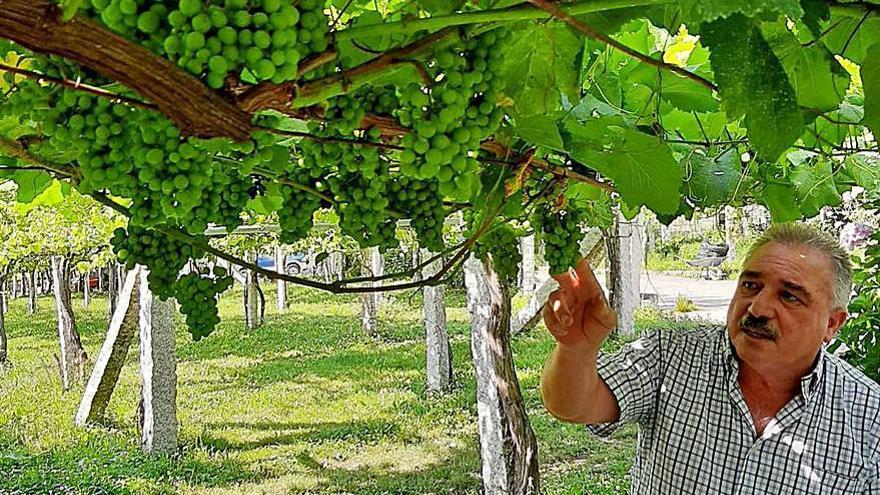 Una bodega de la IXP Ribeiras do Morrazo, premiada en la Cata dos Viños de Galicia