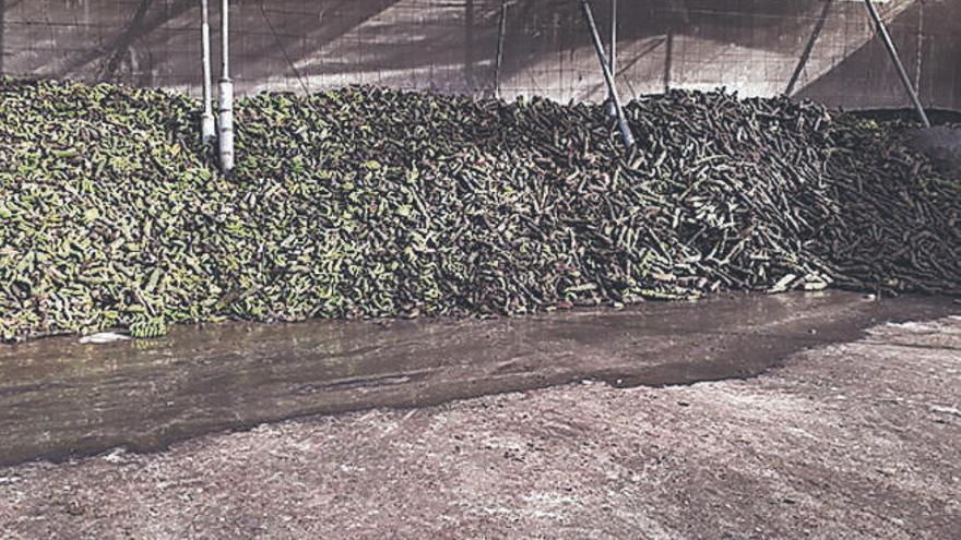 La planta de compost de Triana es inocua y tiene todas las licencias