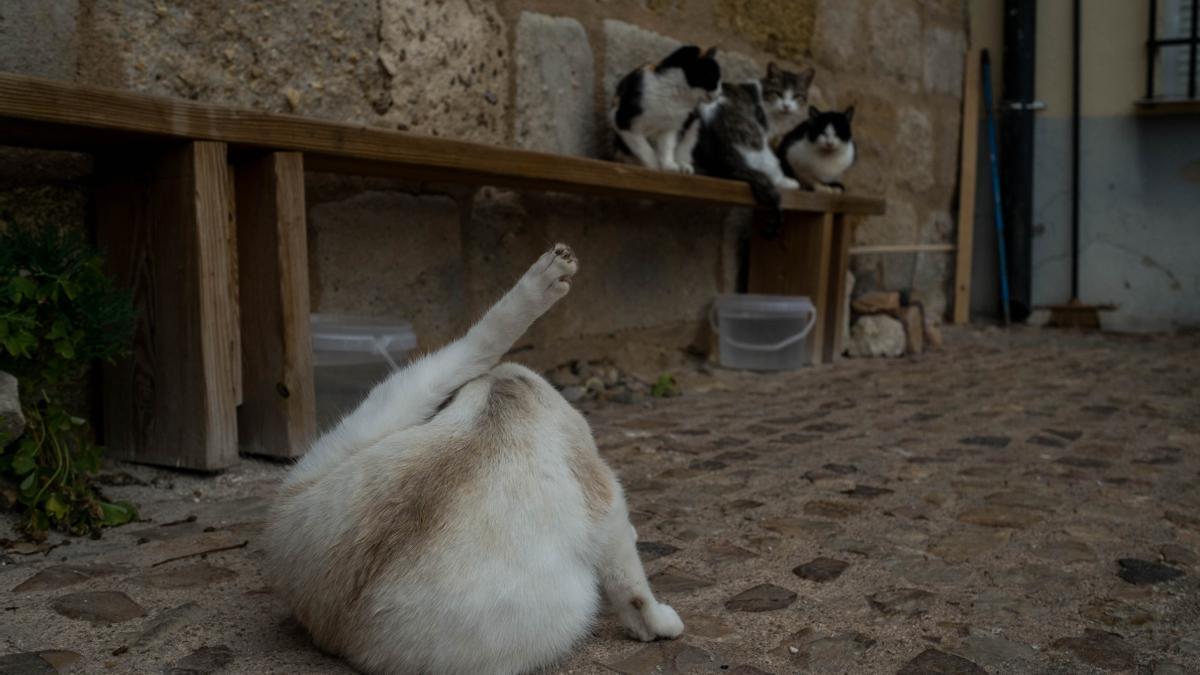 Gatos callejeros en Zamora.