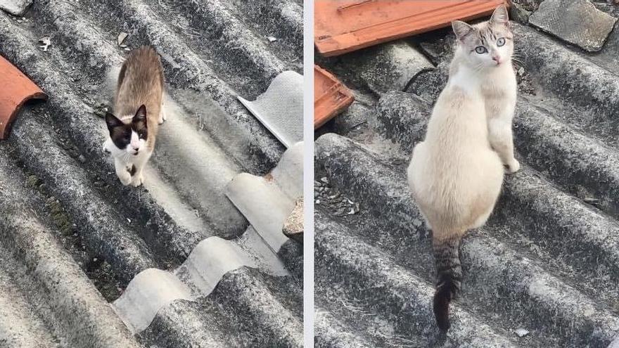 Comunican al Seprona el ataque a una colonia de gatos en Lérez