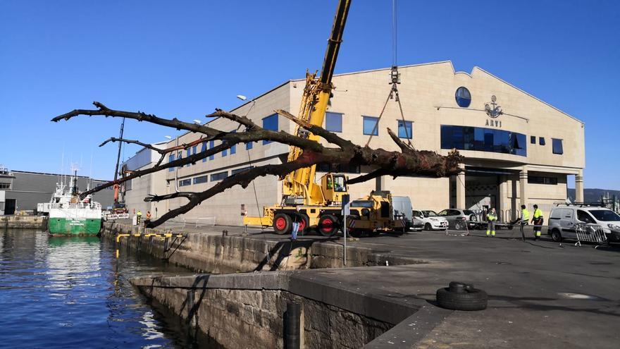 El tronco flotante de la ría de Vigo llega a puerto