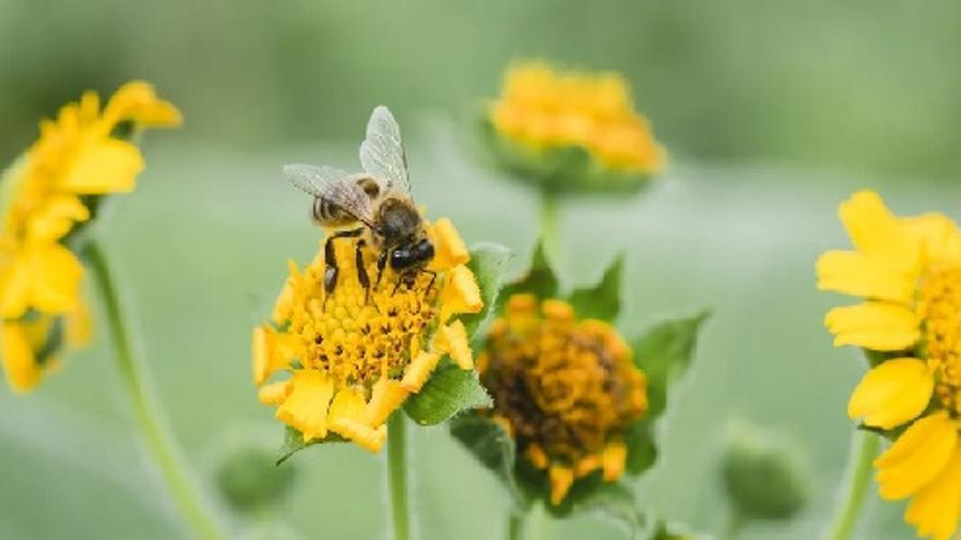 Festival MUMES: Charla - Mieles del mundo y el mundo de las abejas