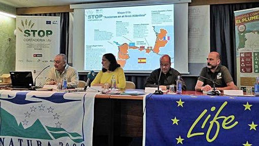 El Ceida y SEO/Birdlife harán una cartografía del plumacho en Galicia