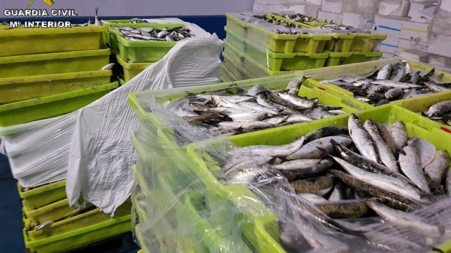 La Guardia Civil incauta cerca de 6 toneladas de sardinas descargadas en Portonovo