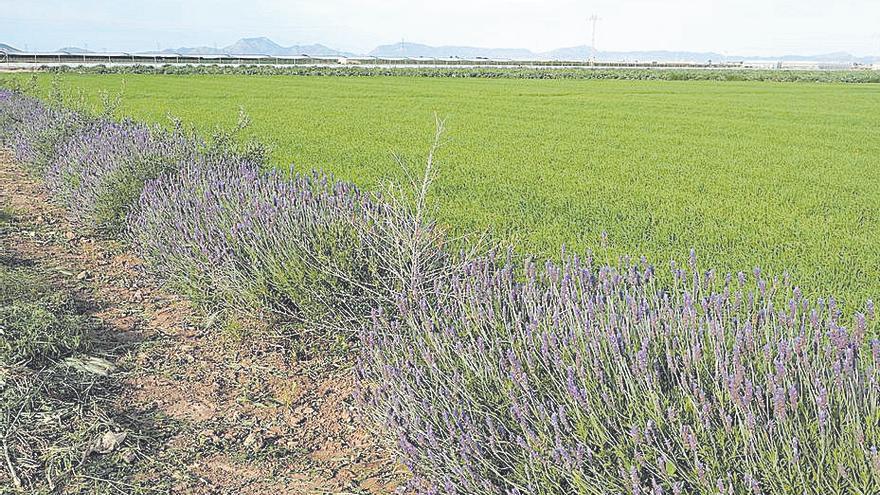 Animan a plantar en las zonas agrarias setos y barreras vegetales