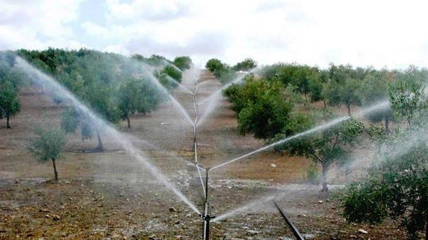 Un estudio de la UCO consigue predecir el agua que usarán los regantes en cada periodo tarifario