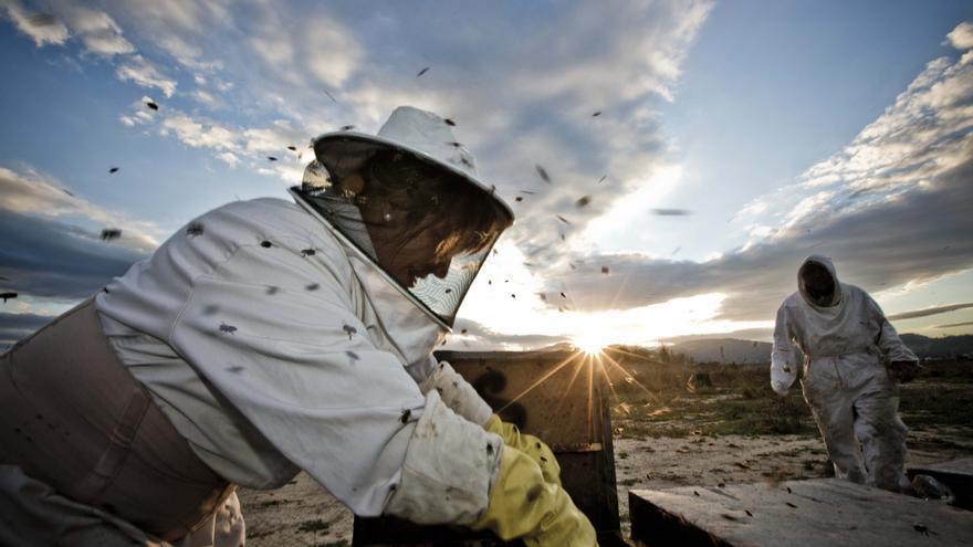 La producción de miel cae un 35% en un año en Alicante por el cambio climático y las plagas