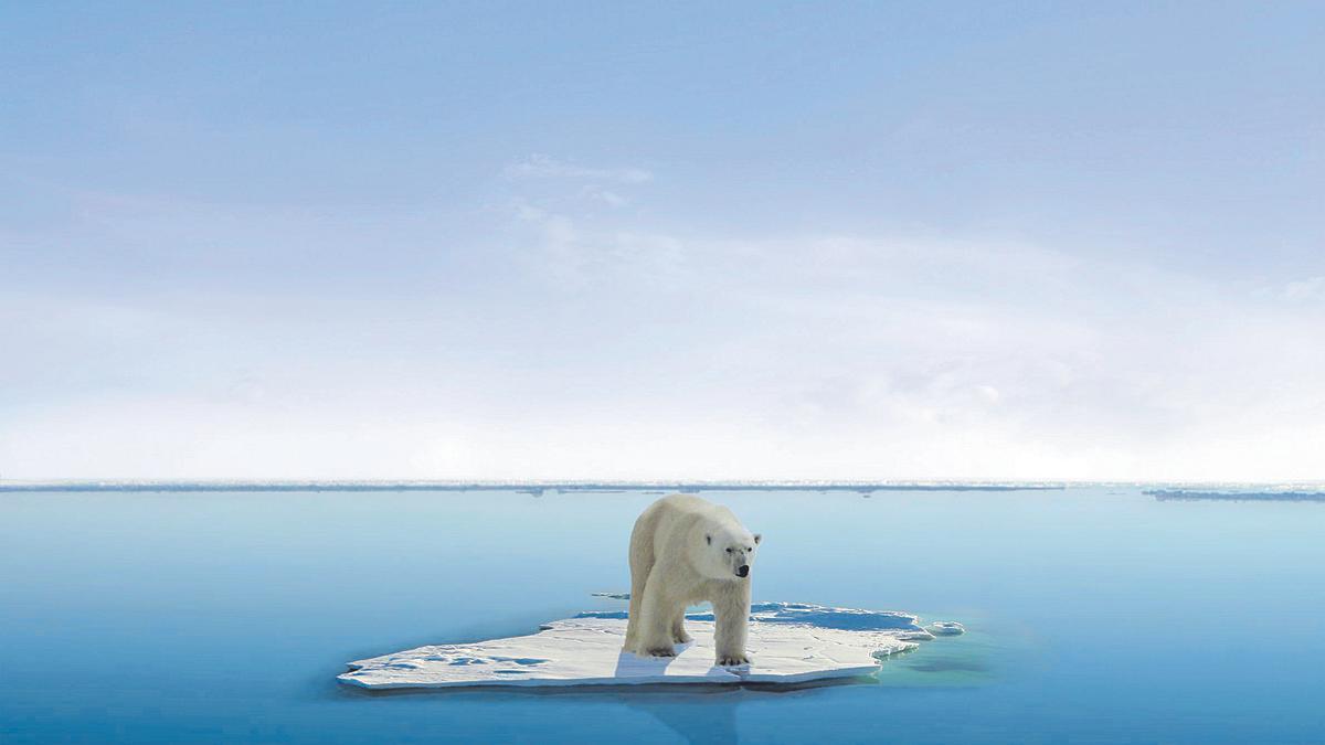 Os polar aïllat sobre una massa de gel
