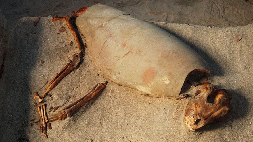 Descubierto en Egipto el cementerio de mascotas más antiguo conocido