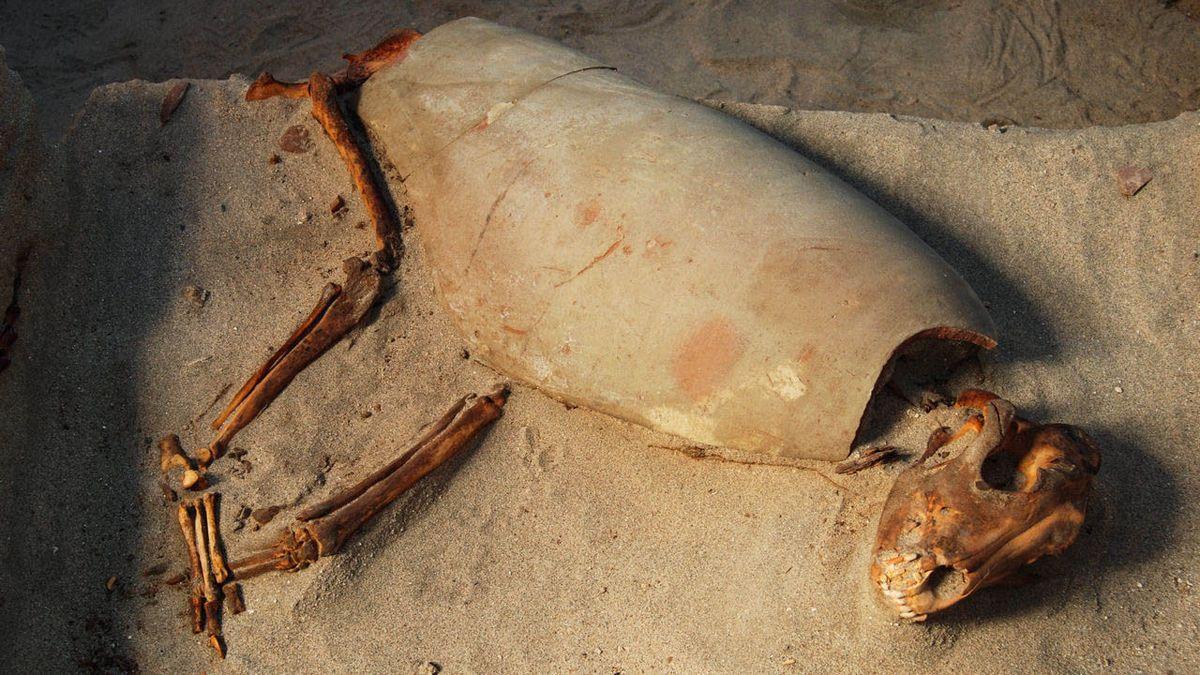 Restos de una mascota hallados en Berenice, Egipto.