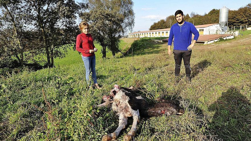 Unións demanda una mesa de diálogo sobre la gestión del lobo y convoca una protesta el día 9