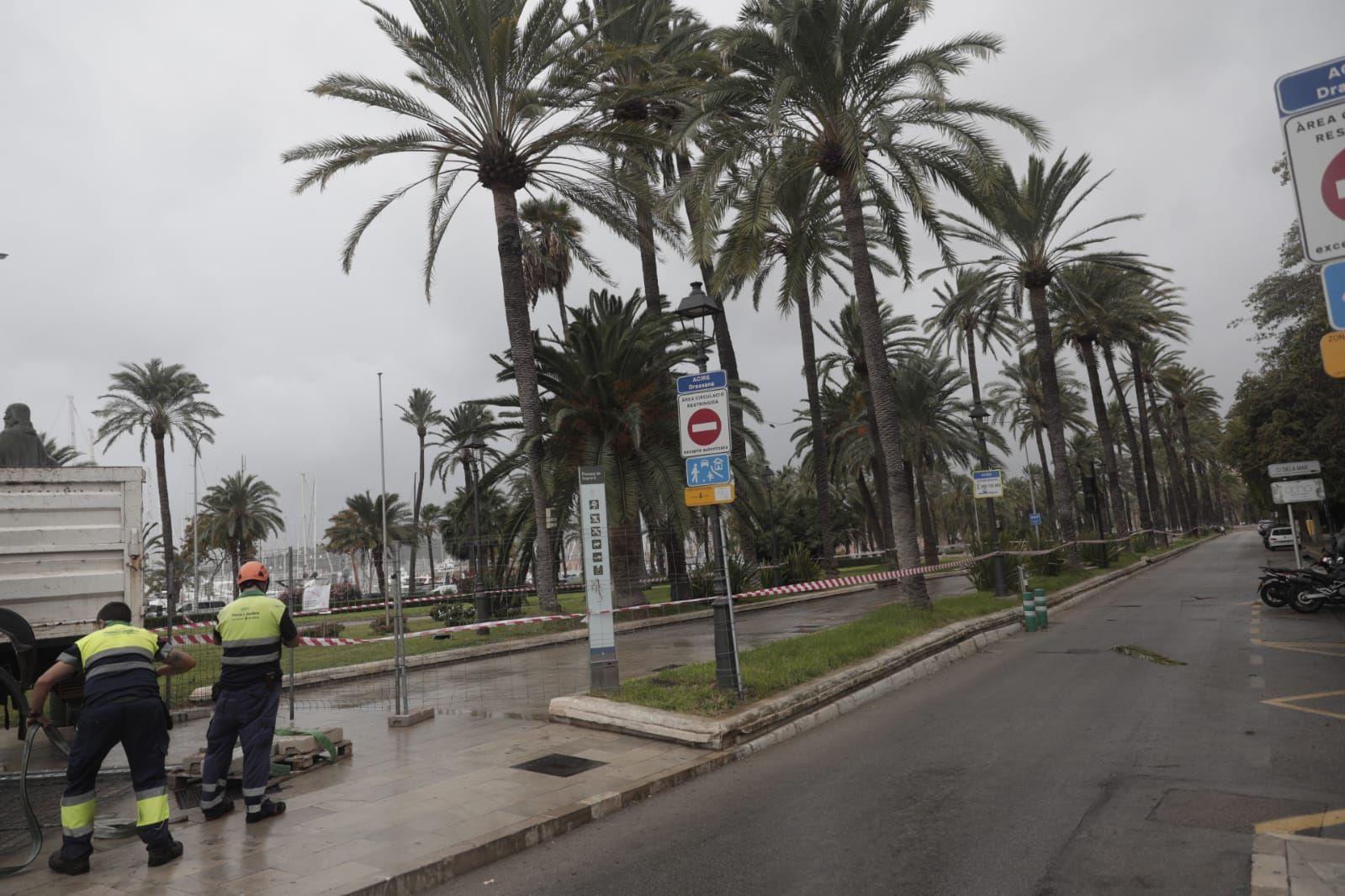 Cort vuelve a cerrar a peatones el paseo Sagrera y Dalt Murada por el viento