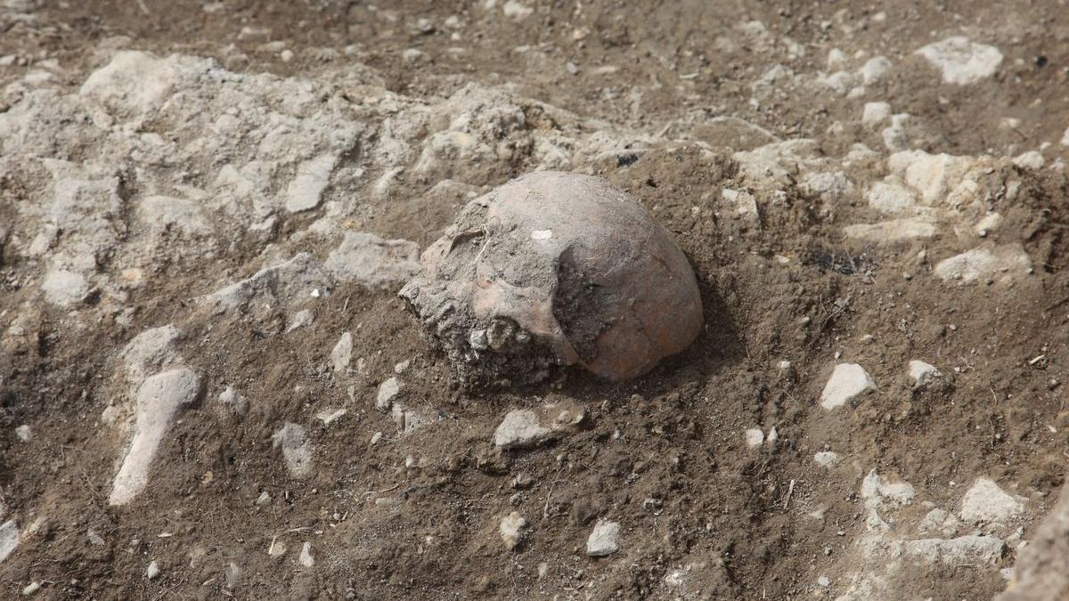 Algunos de los huesos hallados en las excavaciones del Corro de Portell.