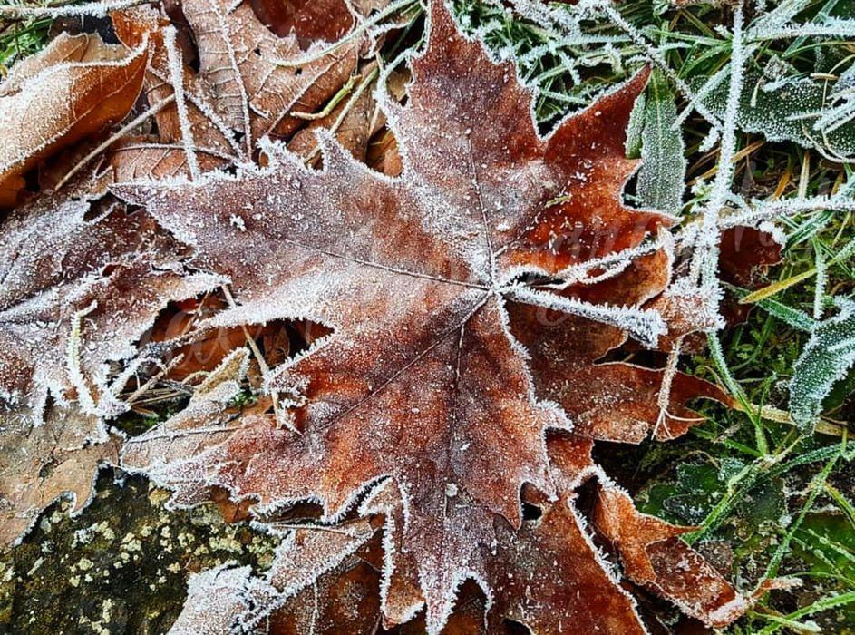 Hivern. Aquesta imatge es va captar l'última nit de l'any. Va caure una gran gelada i ens va deixar aquesta estampa d'una fulla plena de cristalls de gel.