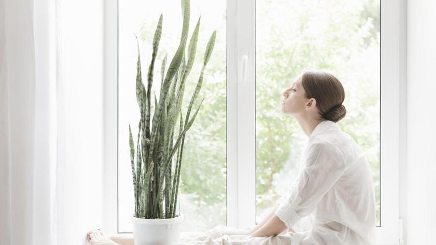 Seis plantas que purifican el aire de tu casa - La Opinión de A Coruña