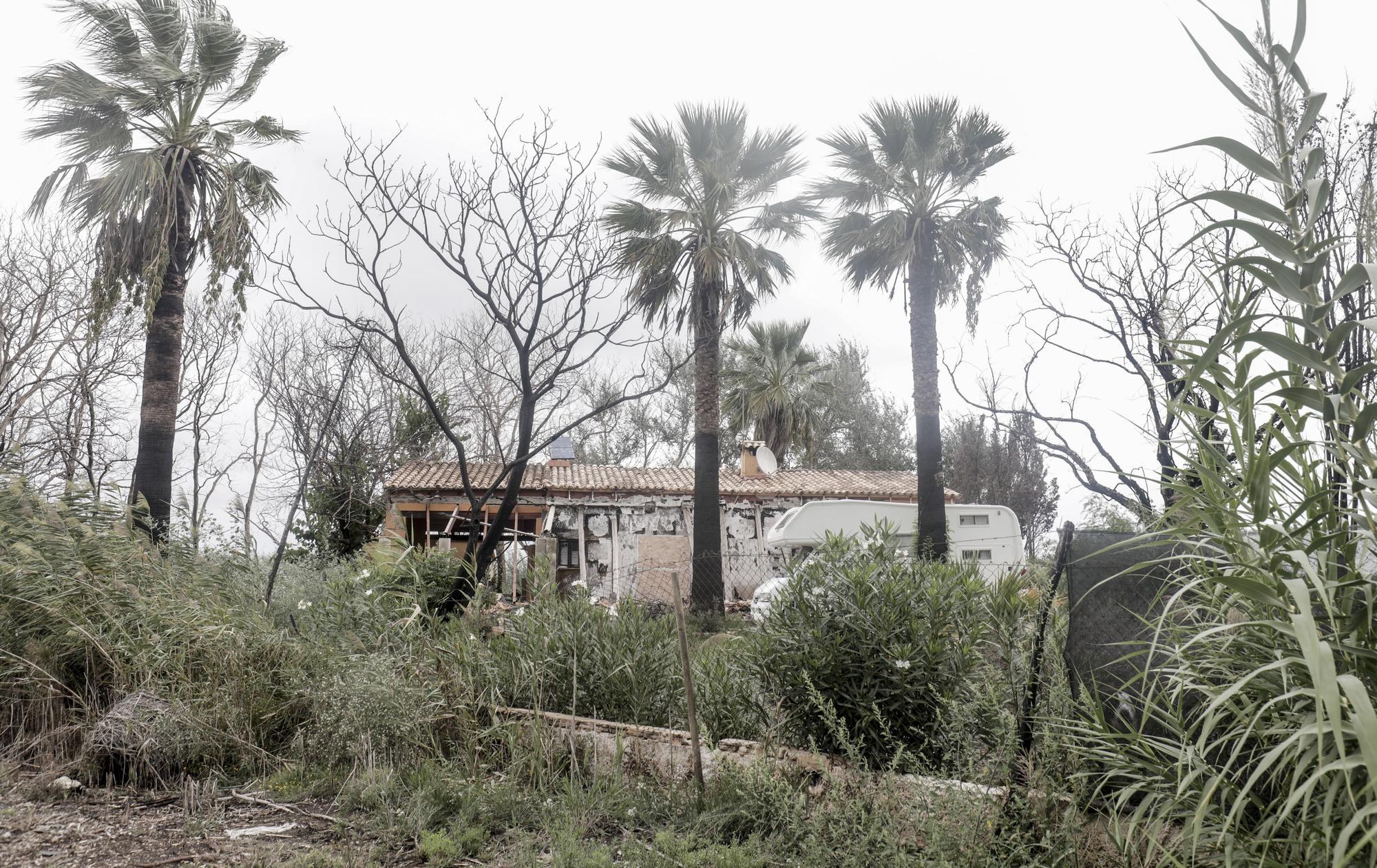 S'Albufera, un año después del incendio