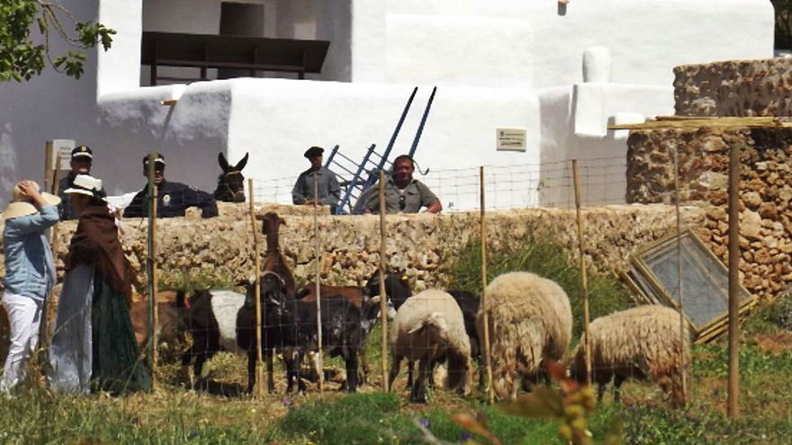 «La ganadería de Ibiza  está en peligro de extinción»