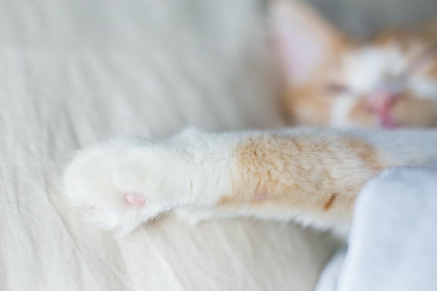 Adopción gato Facebook