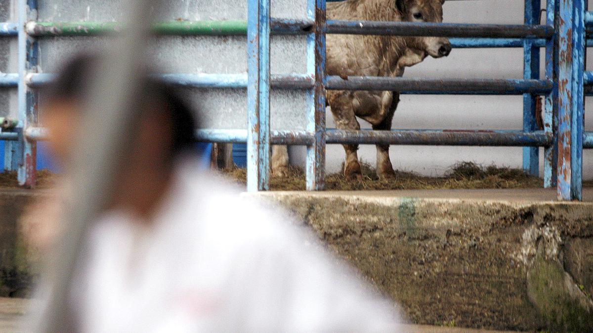 Una vaca en un matadero.