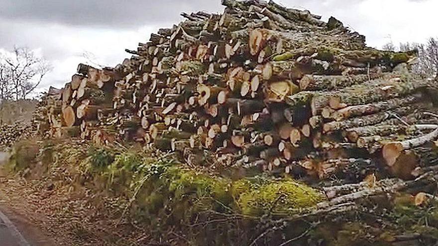 """Piden responsabilidades por un """"arboricidio"""" en el corazón de la Ribeira Sacra"""