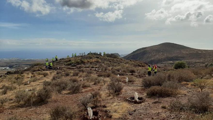 La finca Lomo Calacio será reconvertida en un bosque de plantas endémicas