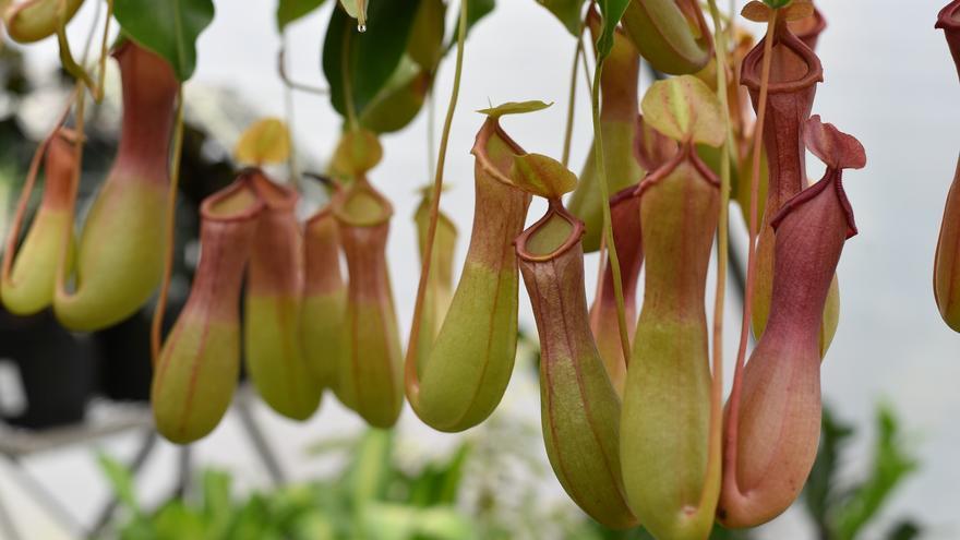 La planta que te librará de los mosquitos en tu casa