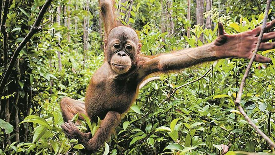 Aceite de palma: deforestar el planeta comiendo galletas