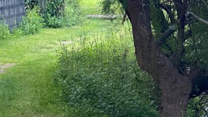 """Moaña reconoce la """"plaga"""" de ratas en el río pero no puede actuar en espacios abiertos"""