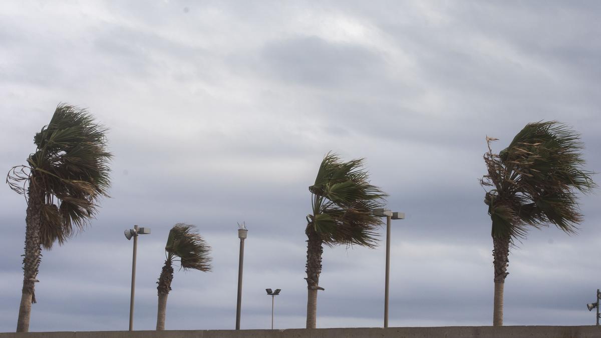 Alerta amarilla por fuertes vientos en la Comunitat para el día de Navidad
