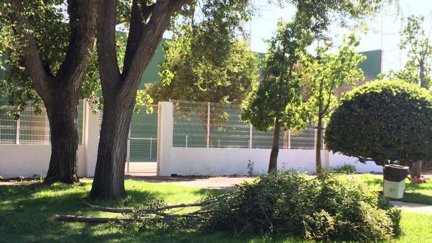 Cae la copa de un árbol en la piscina de Silla