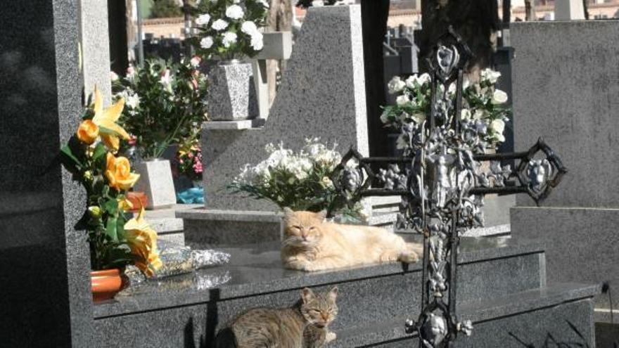 """Una plataforma recoge más de 10.000 firmas para que el Ayuntamiento """"devuelva los gatos capturados al cementerio"""""""