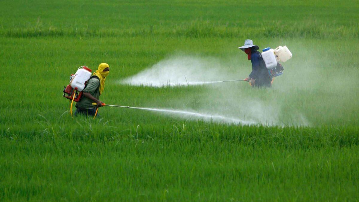 Alertan de los dañinos efectos de los pesticidas sobre los ríos