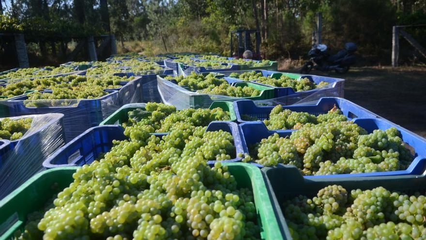 Los viticultores podrán vender 1.500 kilos más de uva por hectárea