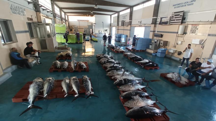 Vinaròs cierra a lo grande la pesca del atún rojo en la Comunitat: 2.000 kilos en un solo día