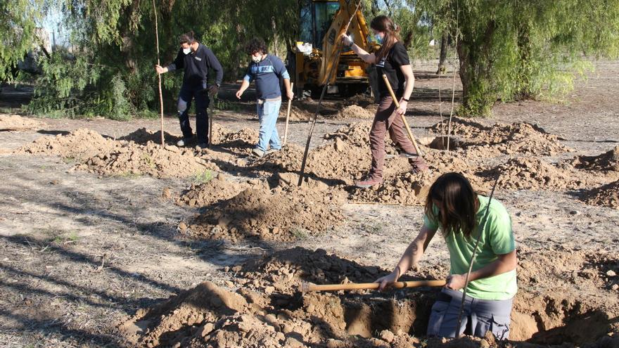 Rojales recupera el bosque de ribera junto al Segura