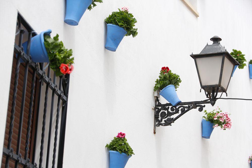 Calles en Flor