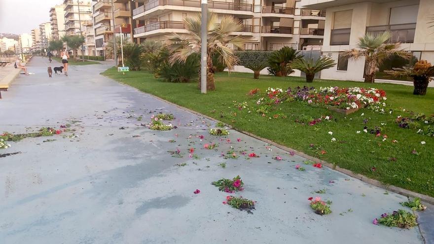 Incívics fan destrosses al passeig de Sant Antoni de Calonge