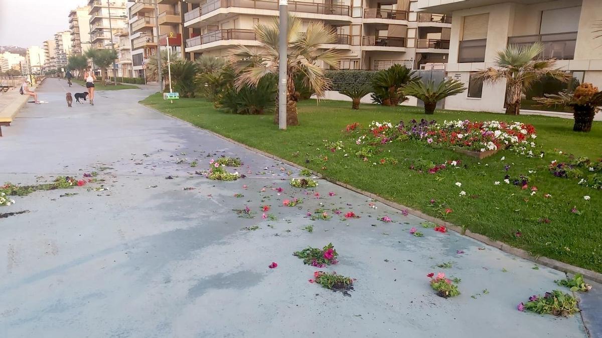 Destrosses a una decoració floral del passeig de Sant Antoni de Calonge