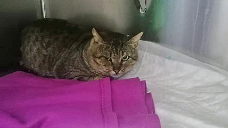Investigan el ataque con un arma de balines a un gato en el barrio de A Parda