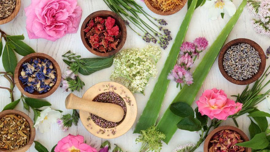 ¿Cómo usar bien las plantas medicinales?