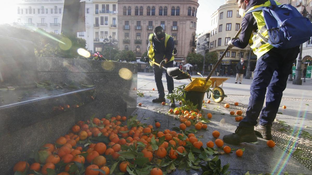 La recogida de la naranja en Córdoba emplea a 81 personas con discapacidad y en riesgo de exclusión
