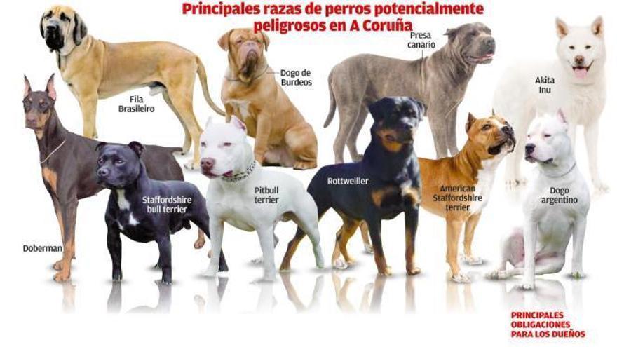 El Concello achaca la falta de registro de perros peligrosos al retraso de la Xunta en sancionar | LOC
