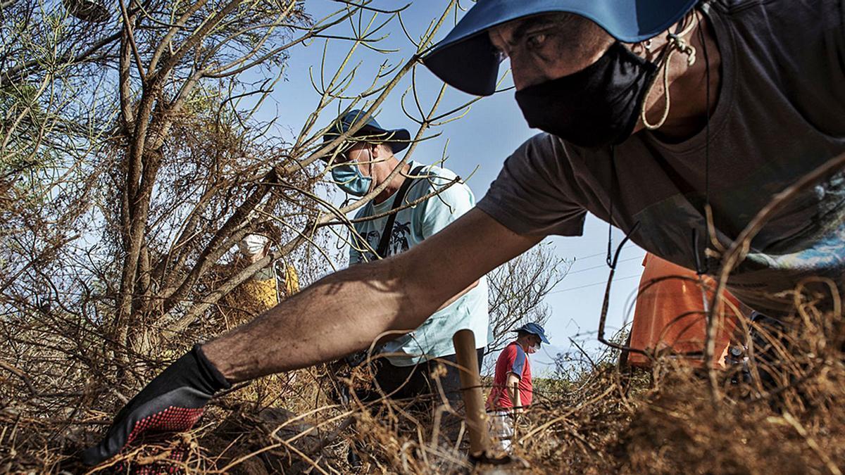 Voluntarios de asociaciones como Afes, Apedeca o la ONCE han colaborado en varios pasos del proceso de restauración de este antiguo bosque termófilo, que aún durará tres años y medio.