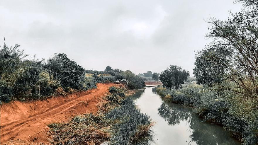 En marcha la eliminación de caña en 229.000 m2 de La Vallesa